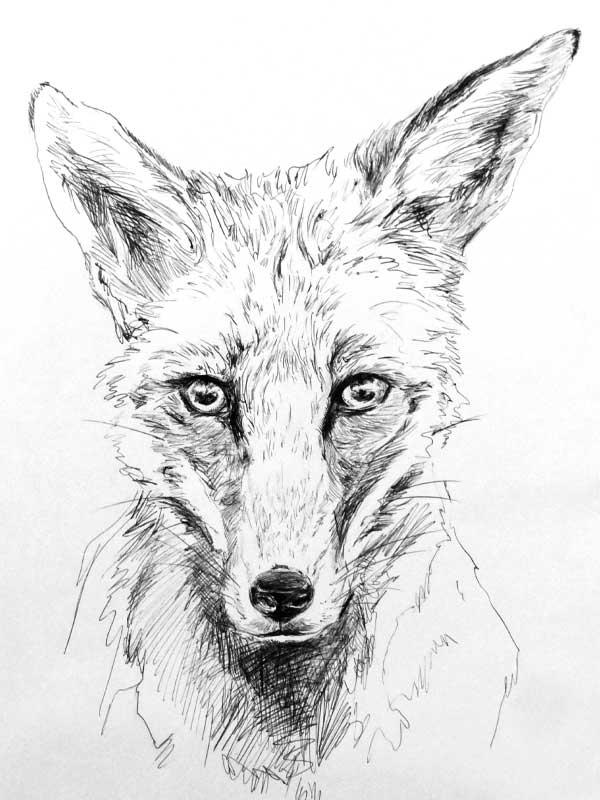 fuchs_zeichnung