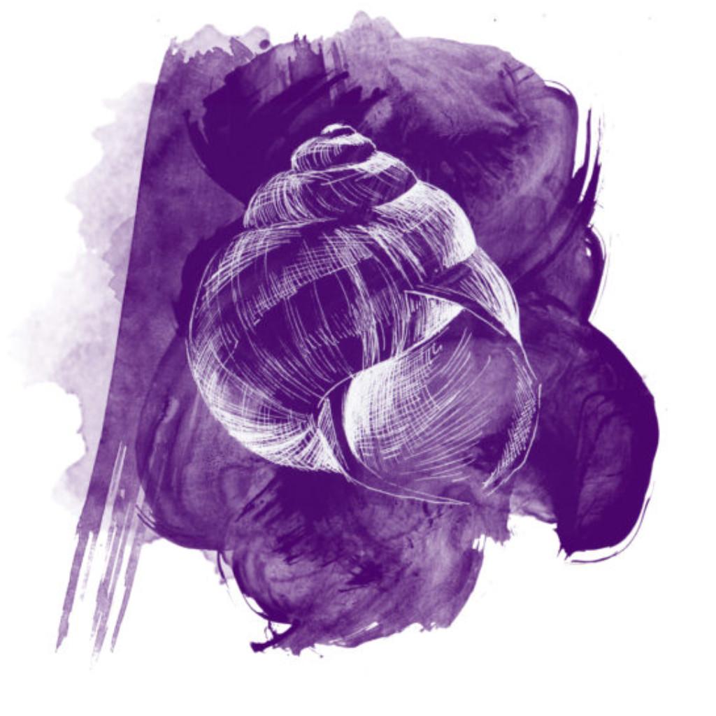 Schneckenhaus weiß auf lila